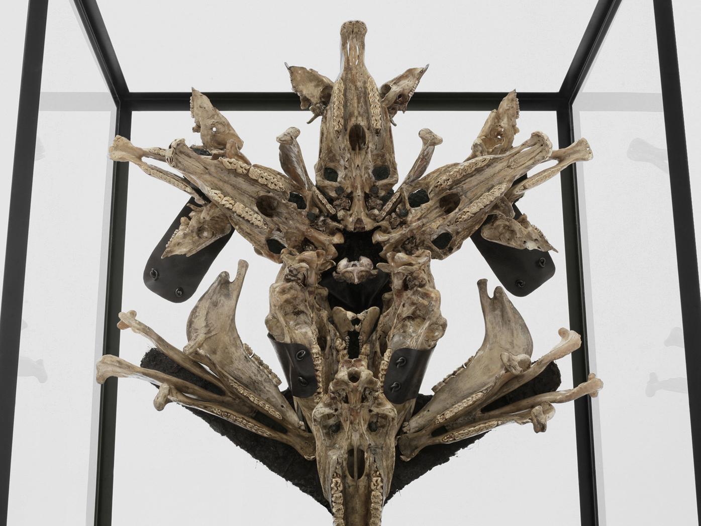 POSSESIA / Triumphant (detail) 2010 / 120 x 250 x 90 cm / horse skulls, pig skulls, wood, leather, steel, weights, fur, soil,  resin, enamel