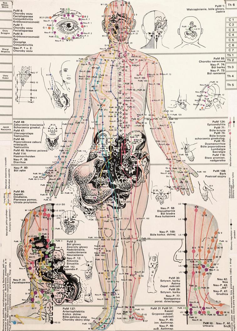 ONANIA / Mutation Study 112 / 2012 / 32 x 46 cm / Ink and crayon on anatomy board