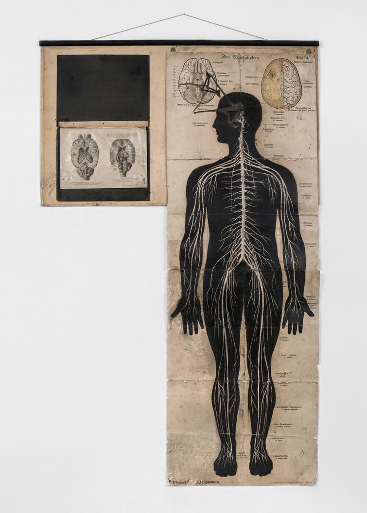 POSSESIA / Nervensystem / 2013 / 100 x 175 cm /  horse anatomy illustration, human anatomy board, coloured pencil